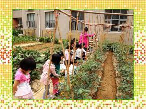幼儿园大班科学活动《藤蔓爬,结成瓜》