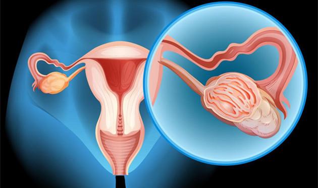 子宫移植需要多少钱 男人移植子宫是不是也可以怀孕