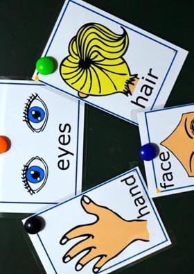 托班数学教案《分类》能根据物体的性质用途分类