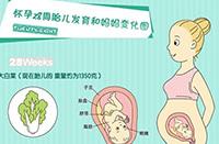 怀孕4-7个月需要注意的知识小科普(附胎儿发育图)