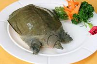8个月孕妇可以吃甲鱼吗 给你几个不能吃的理由